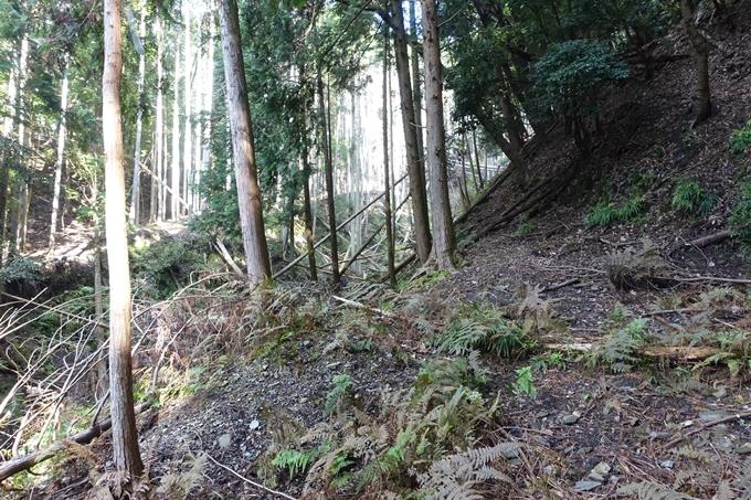 三郎ヶ岳 No24