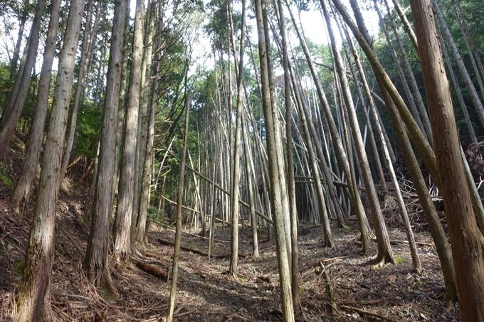 三郎ヶ岳 No28