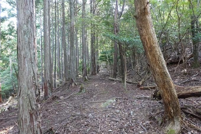 三郎ヶ岳 No39
