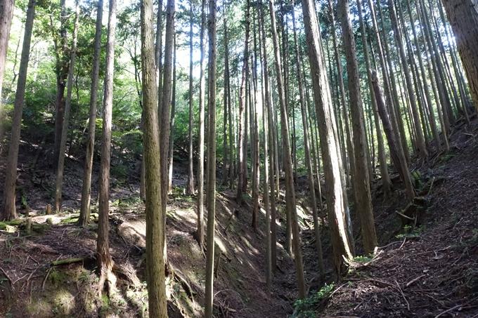 三郎ヶ岳 No45