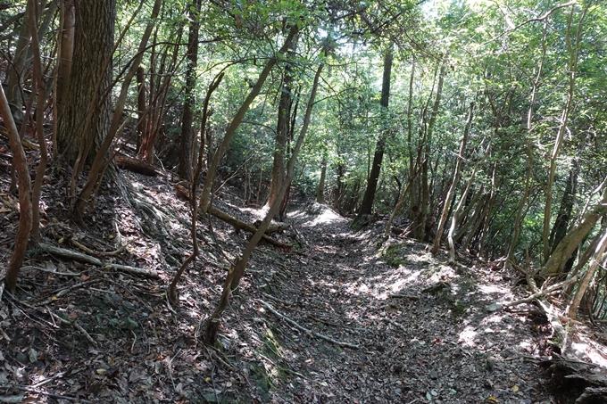 三郎ヶ岳 No104