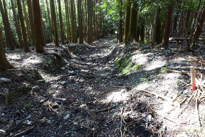 三郎ヶ岳 No109