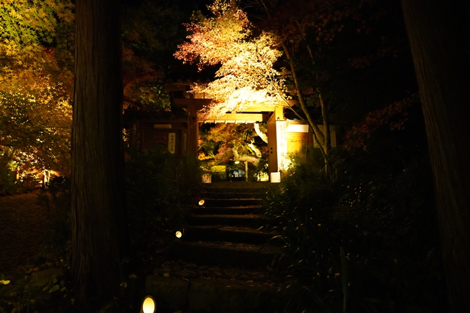 京都_紅葉_2020_神蔵寺 No11
