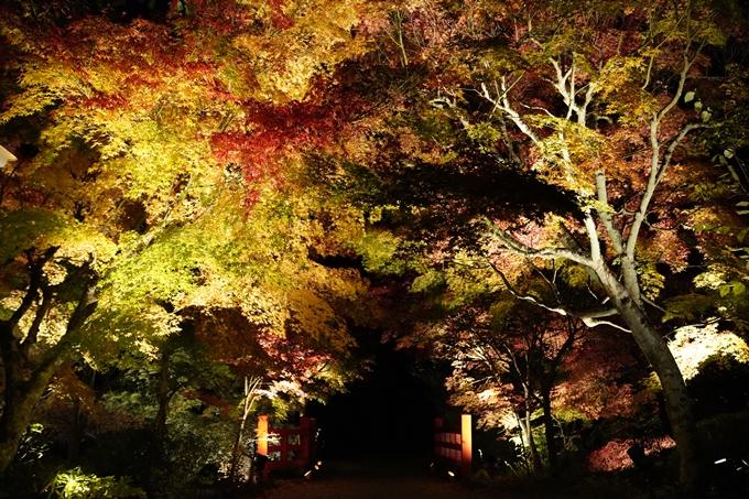 京都_紅葉_2020_神蔵寺 No22