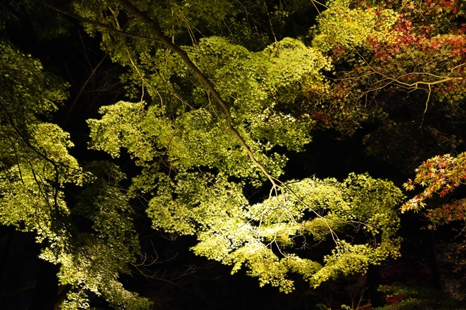 京都_紅葉_2020_神蔵寺 No6