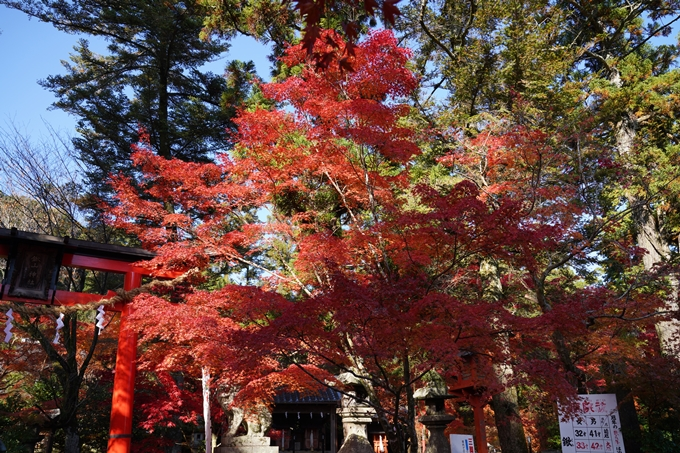 京都_紅葉_2020_鍬山神社 No8