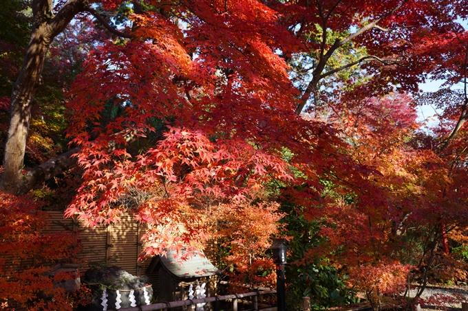 京都_紅葉_2020_鍬山神社 No10