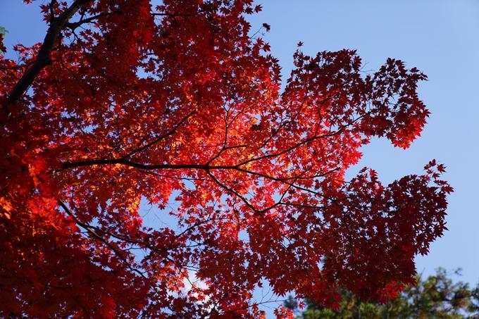 京都_紅葉_2020_鍬山神社 No12