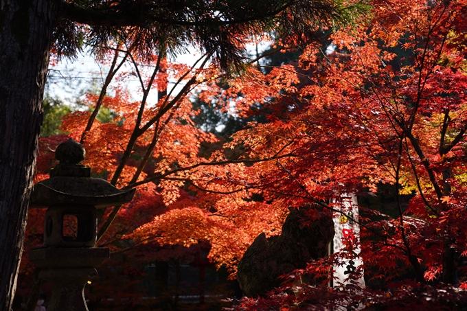 京都_紅葉_2020_鍬山神社 No13