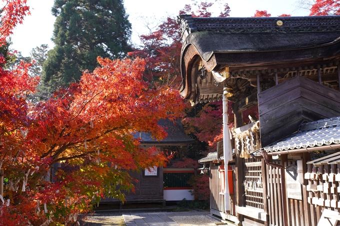 京都_紅葉_2020_鍬山神社 No15