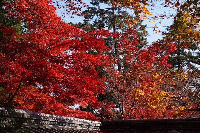 京都_紅葉_2020_鍬山神社 No19