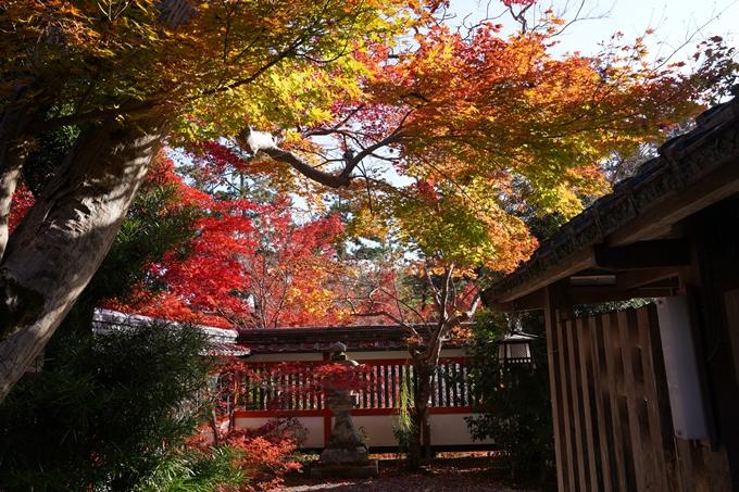 京都_紅葉_2020_鍬山神社 No20