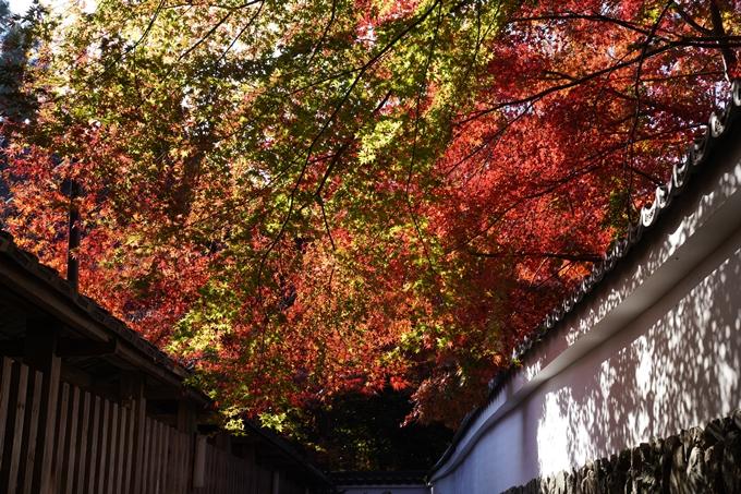 京都_紅葉_2020_鍬山神社 No22