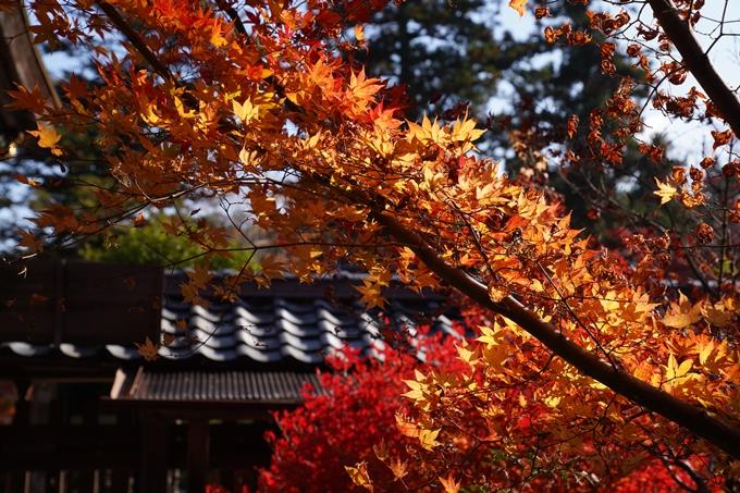 京都_紅葉_2020_鍬山神社 No24