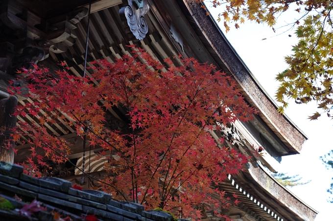 京都_紅葉_2020_鍬山神社 No26