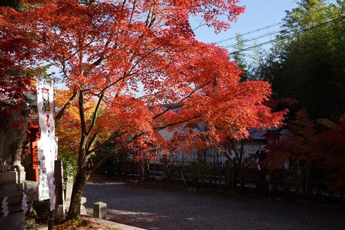 京都_紅葉_2020_鍬山神社 No31