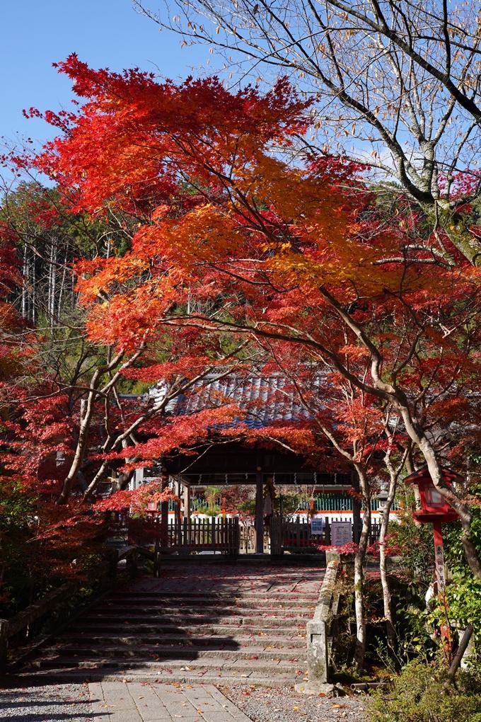 京都_紅葉_2020_鍬山神社 No32