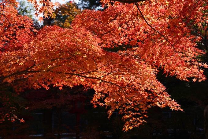 京都_紅葉_2020_鍬山神社 No33