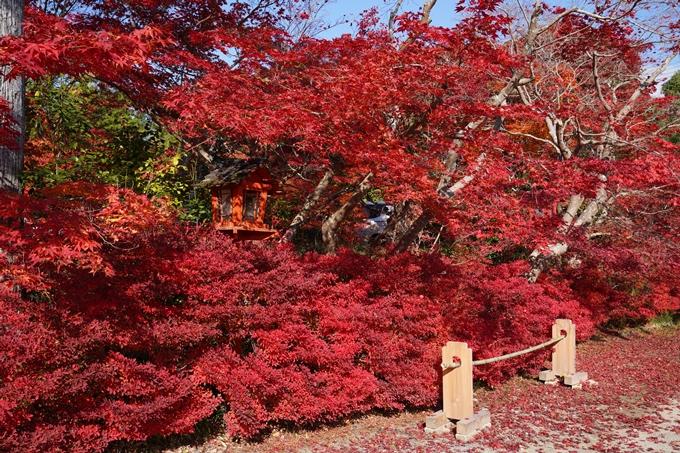 京都_紅葉_2020_鍬山神社 No34