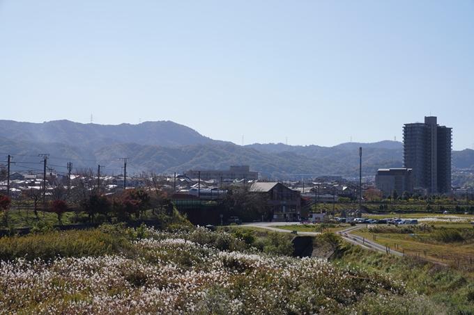 京都_紅葉_2020_請田神社 No11