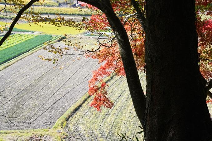 京都_紅葉_2020_桑田神社 No12