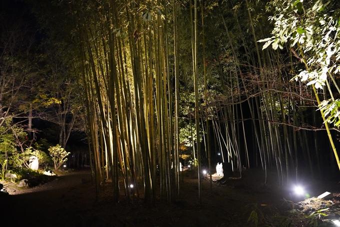嵐山花灯路_2020_02 No35