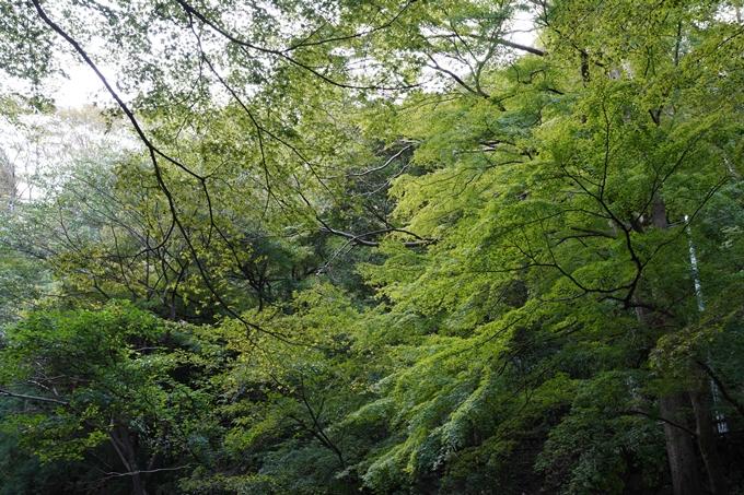 番外編_岐阜県_養老の滝 No14