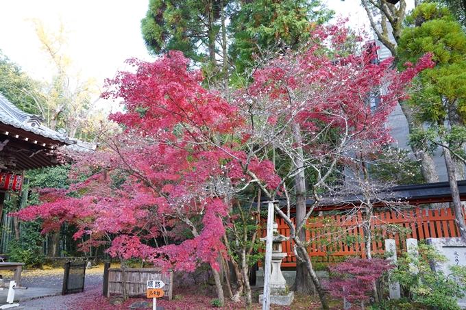 京都_紅葉_2020_赤山禅院 No8