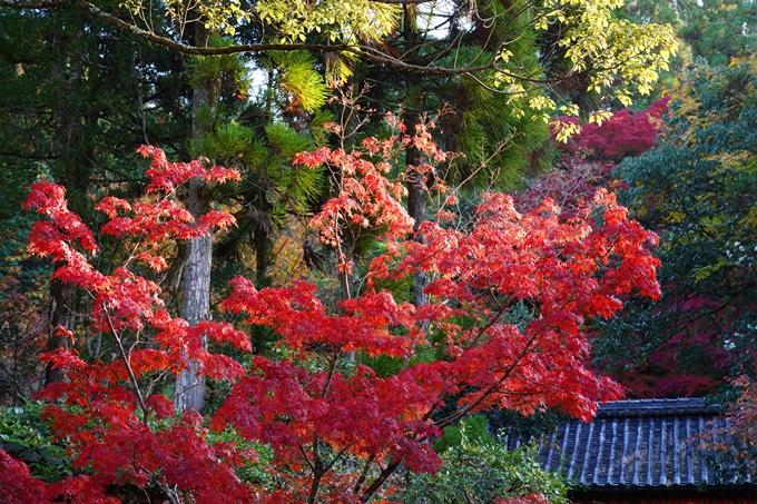 京都_紅葉_2020_赤山禅院 No12