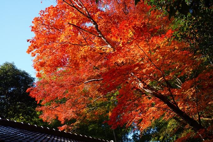 京都_紅葉_2020_赤山禅院 No25