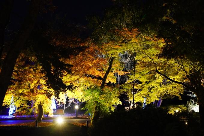 京都_紅葉_2020_植物園 No12
