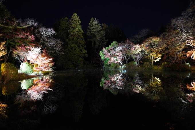 京都_紅葉_2020_植物園 No15