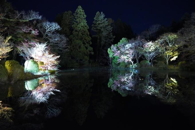 京都_紅葉_2020_植物園 No17
