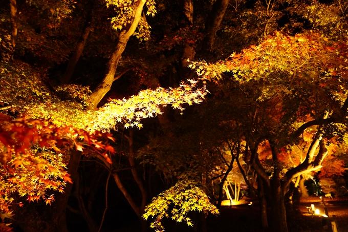 京都_紅葉_2020_植物園 No18