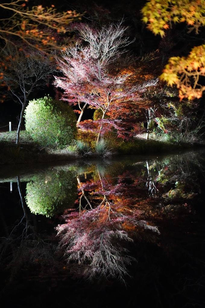 京都_紅葉_2020_植物園 No19