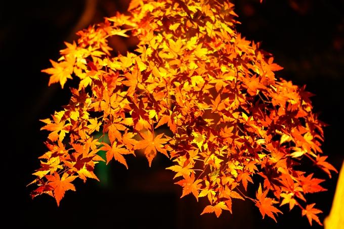 京都_紅葉_2020_植物園 No20