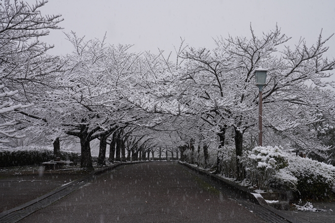 亀岡市内_雪景色_2020 No5