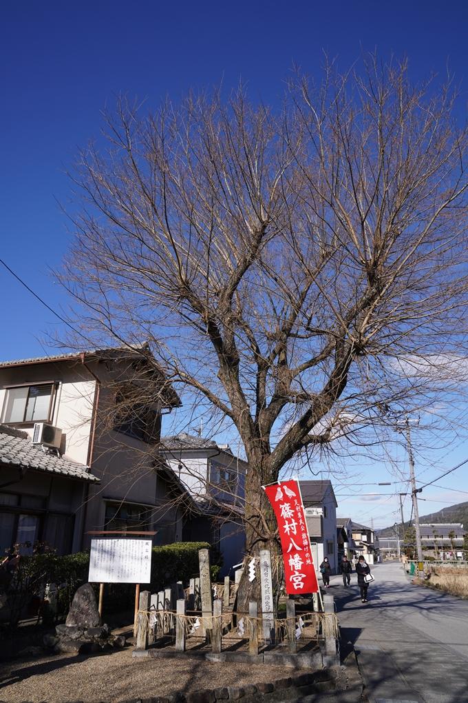 麒麟がくる_篠村八幡宮 No31