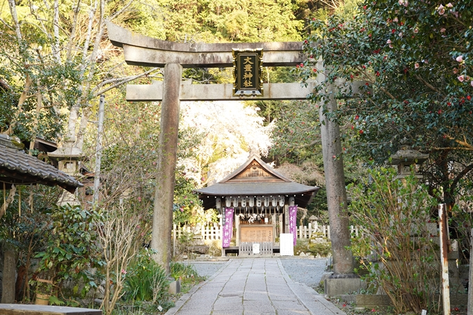 桜_2021_15 大豊神社 No5