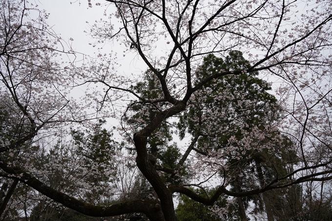 桜_2021_22 真如堂 No5