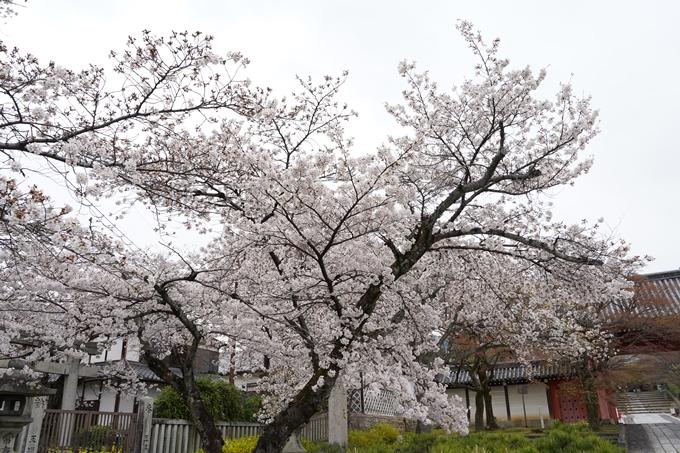 桜_2021_22 真如堂 No11
