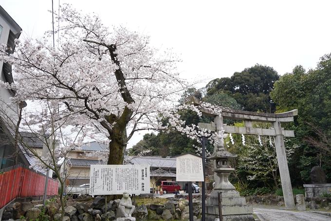 桜_2021_22 真如堂 No14