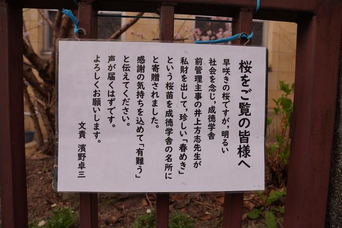 桜_2021_02 成徳中学校跡 No9