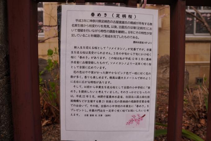 桜_2021_02 成徳中学校跡 No10