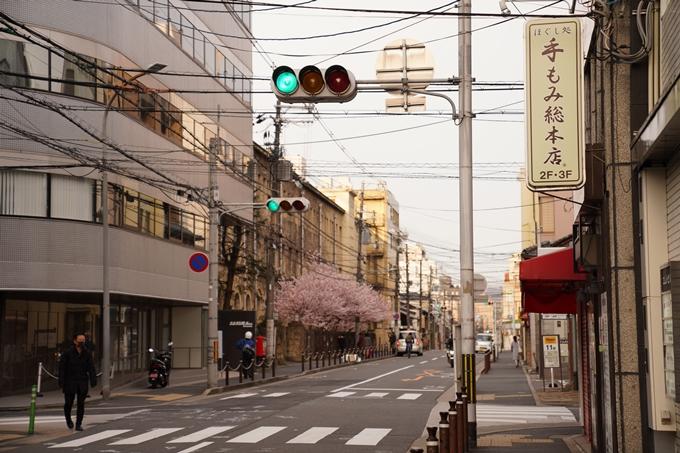桜_2021_02 成徳中学校跡 No16