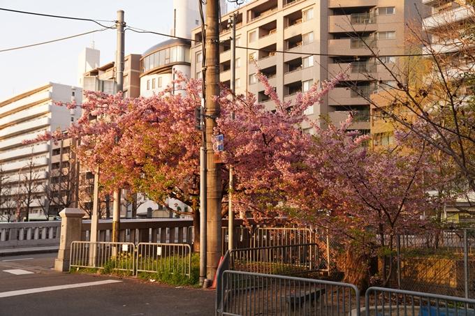 桜_2021_03 一条戻橋 No2