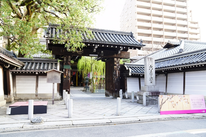 桜_2021_08 六角堂 No2