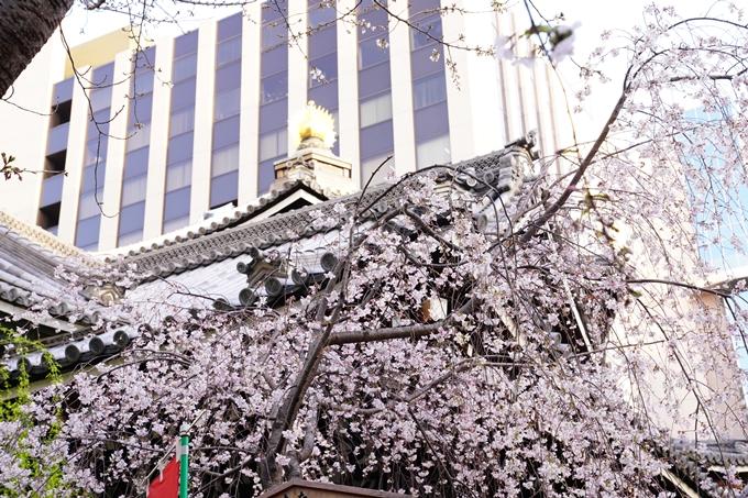 桜_2021_08 六角堂 No7