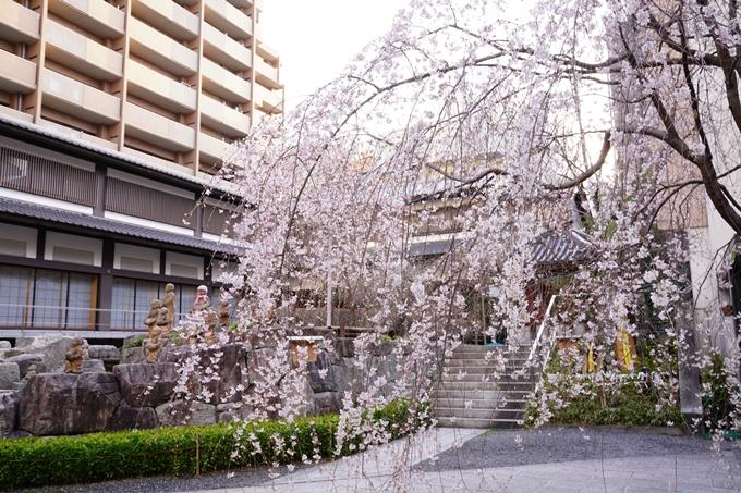 桜_2021_08 六角堂 No9