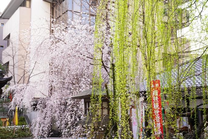 桜_2021_08 六角堂 No17